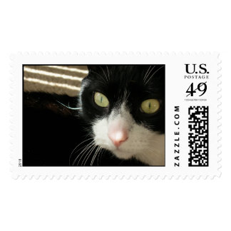 My Forever Friend Postage Stamp