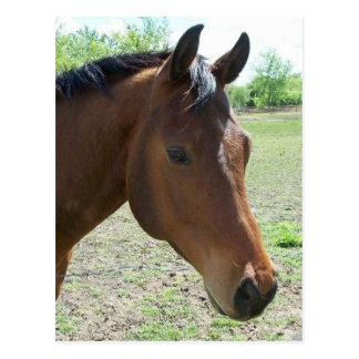 My Friend, The Horse Postcard