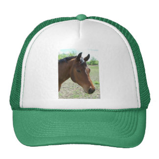 My Friend, The Horse Trucker Hat