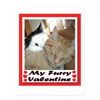 My Furry Valentine Postcard