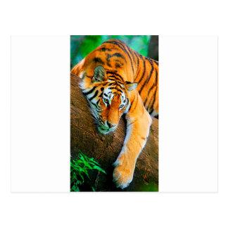 My-Galaxy-Note2-Wallpaper-HD-Animals%20(128).jpg Post Card
