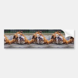 My Grumpy Dog is Saying Bulldog !!! Car Bumper Sticker