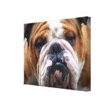 My Grumpy Dog is Saying Bulldog !!! Stretched Canvas Print
