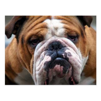 My Grumpy Dog is Saying Bulldog !!! Postcard