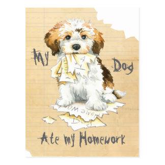 My Havanese Ate My Homework Postcard