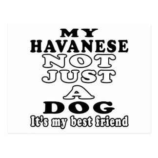 My Havanese Not Just A Dog It's My Best Friend Postcard