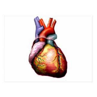 My Heart The MUSEUM Zazzle Gifts Postcard