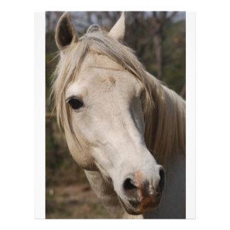 My horse face flyer design