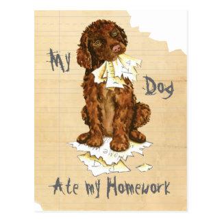 My Irish Water Spaniel Ate My Homework Postcard