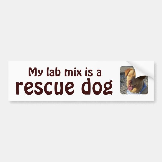 My lab mix is a rescue dog bumper sticker