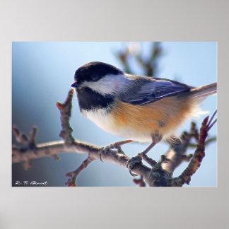 My Little Bird Friend, D. H. Benoit Posters