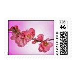 My little blossome postage stamp