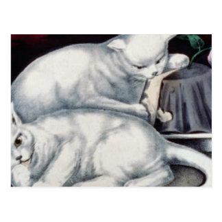 My little kittie takes the cake white kittens postcard