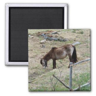 My Little Pony Magnet