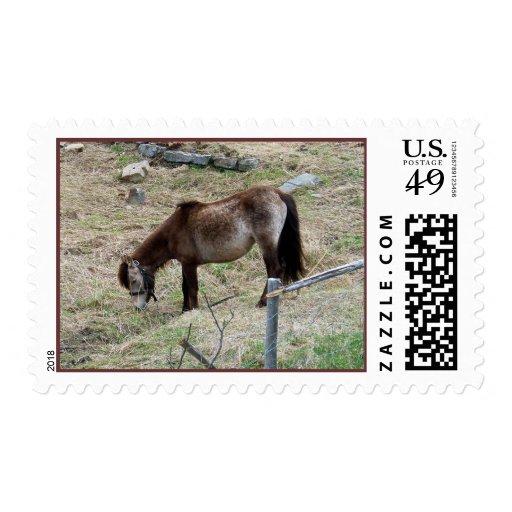 My Little Pony Stamp
