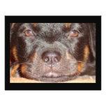 My Little Rottweiler Flyer