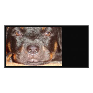 My Little Rottweiler Photo Cards