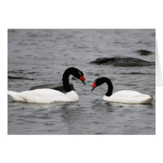 My Love for You Is Endless - Swans Card