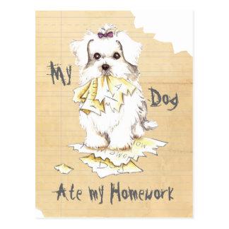 My Maltese Ate my Homework Postcard