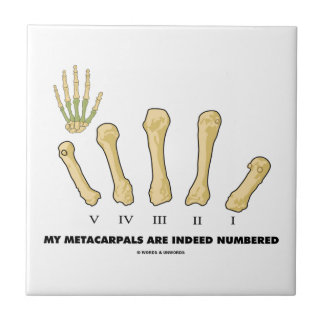 My Metacarpals Are Indeed Numbered (Anatomy) Small Square Tile