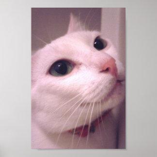 My Milonga Cat Poster