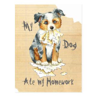 My Mini American Shepherd Ate My Homework Postcard