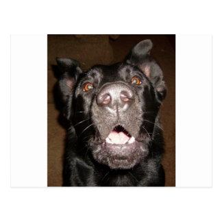 my name is dog postcard