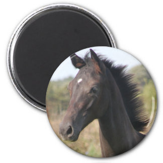 My New Pony 2 Inch Round Magnet