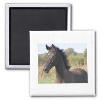 My New Pony 2 Inch Square Magnet