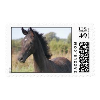 My New Pony Postage