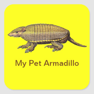 My Pet Armadillo - Cute & Cuddly - YES ! Square Sticker