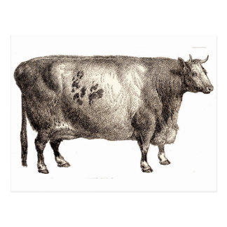 My Pet Bovine (Bull or Cow) Postcard