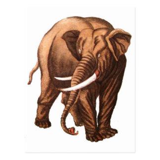 MY PET ELEPHANT POST CARD