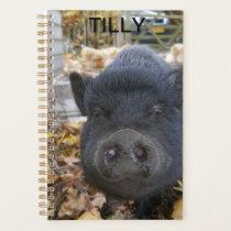 My pet gottinger pig in her enclosure. planner