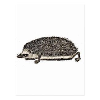 MY PET HEDGEHOG - You Should Get One Postcard