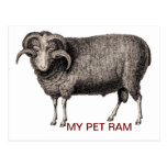 MY PET RAM POST CARDS