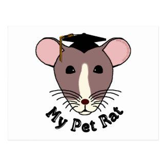 My Pet Rat (Graduate) Post Cards