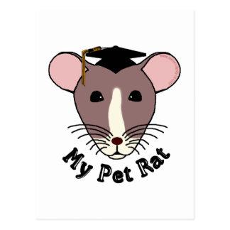 My Pet Rat (Graduate) Postcards