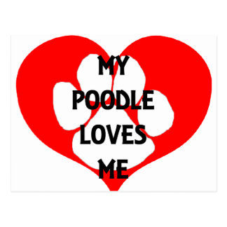 my poodle loves me postcard