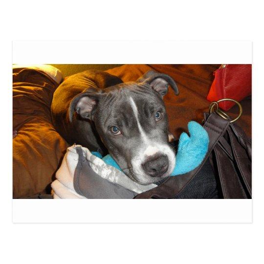 My Pup Postcard