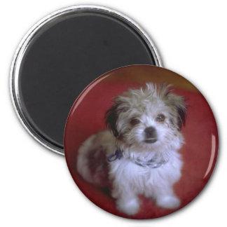 My Puppy Magnet