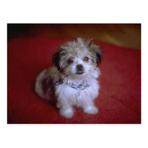 My Puppy Postcard