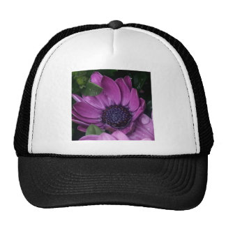My Purple Dream Trucker Hat