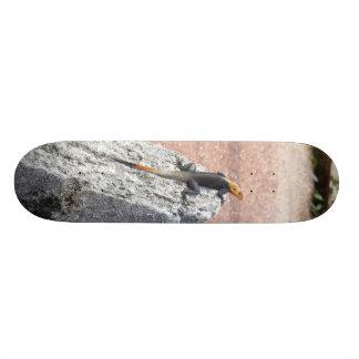 My Rock Skate Board Decks