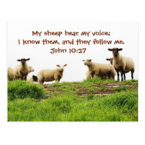 My Sheep Hear My Voice, Bible John 10:27, Custom Postcard