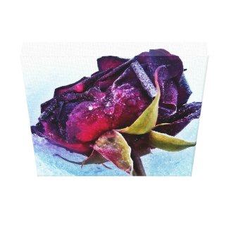 My Tea Rose: Exquisite & Frozen