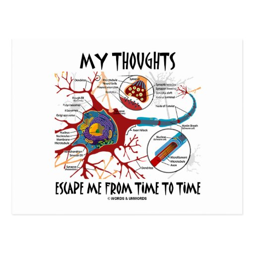 My Thoughts Escape Me From Time To Time Postcard