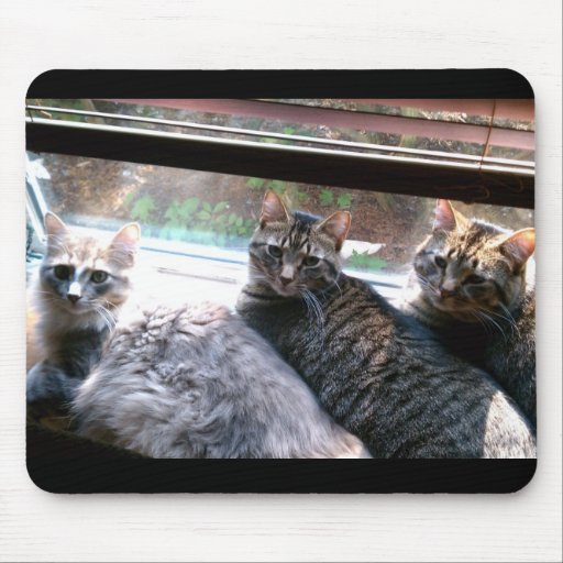 MY three kitty Cats Marlowe Gryphon and Peeper Mouse Pad