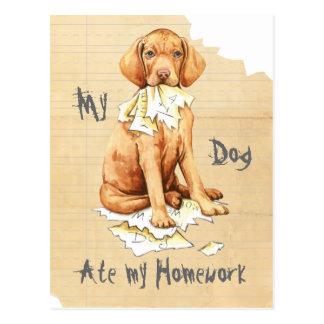 My Vizsla Ate My Homework Postcard