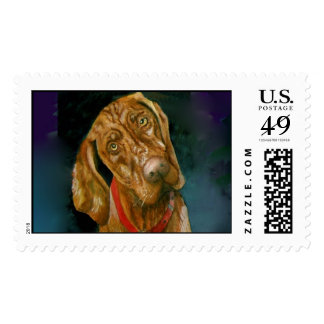 My Vizsla Postage Stamp